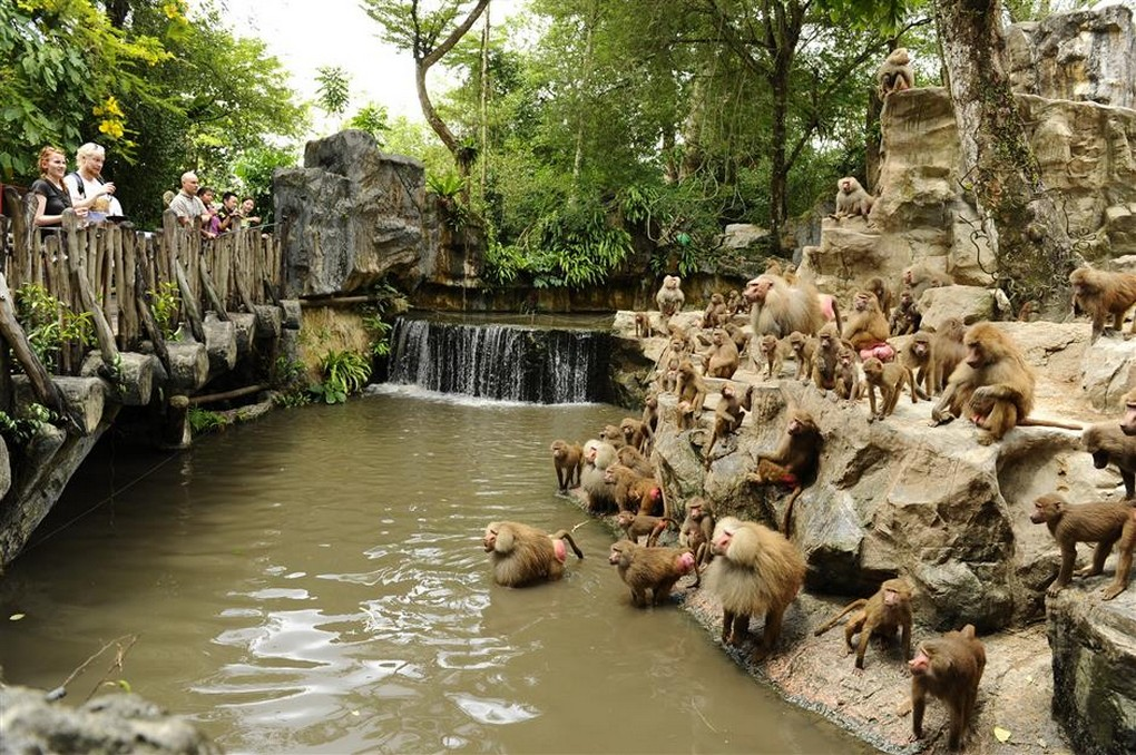 The singapore zoo7 singapore zoo guide singapore zoo travel tips singapore zoo tips
