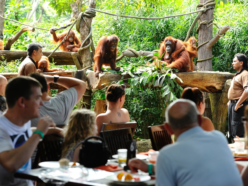 Breakfast in singapore zoo singapore zoo guide singapore zoo travel tips singapore zoo tips