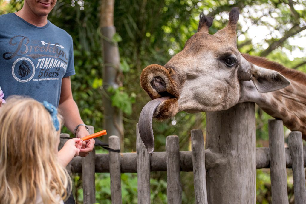 Singapore Zoo0
