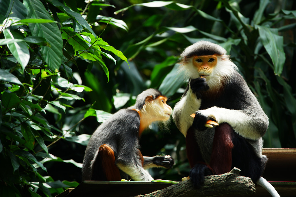 Image by: Singapore Zoo travel tips blog.