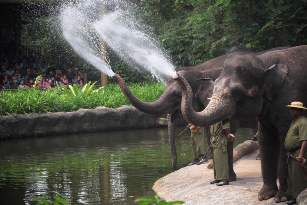 Singapore_Zoo 4