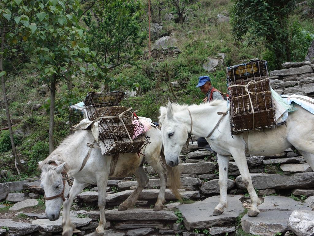 trekking-Poon-Hill-Nepal-9 poon hill trekking poon hill trek 4 days poon hill itinerary