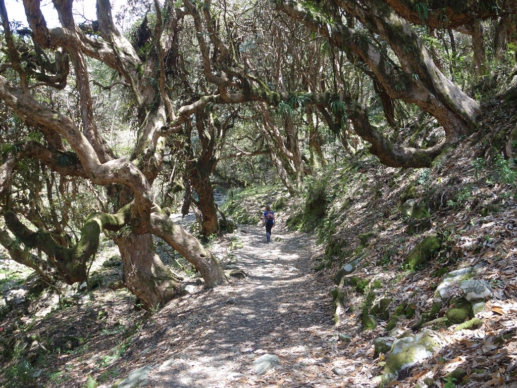 trekking-Poon-Hill-Nepal-i21 poon hill trekking poon hill trek 4 days poon hill itinerary