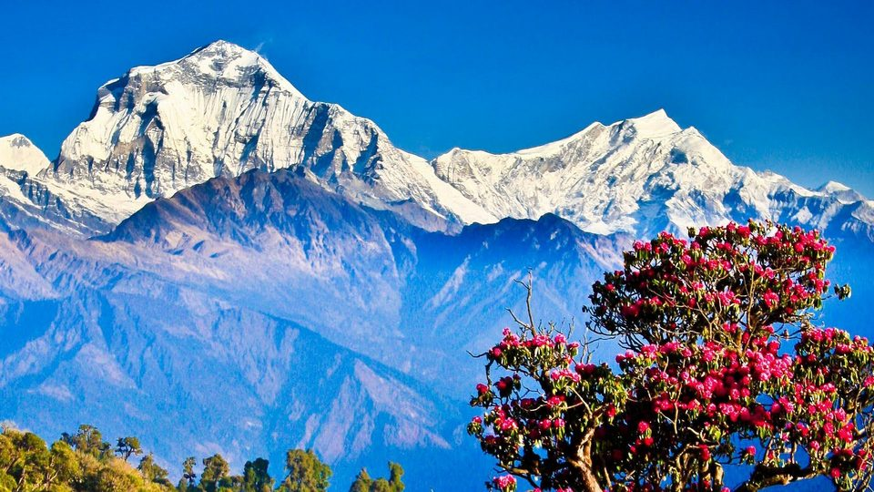 Image by: Poon Hill trek 4 days blog.