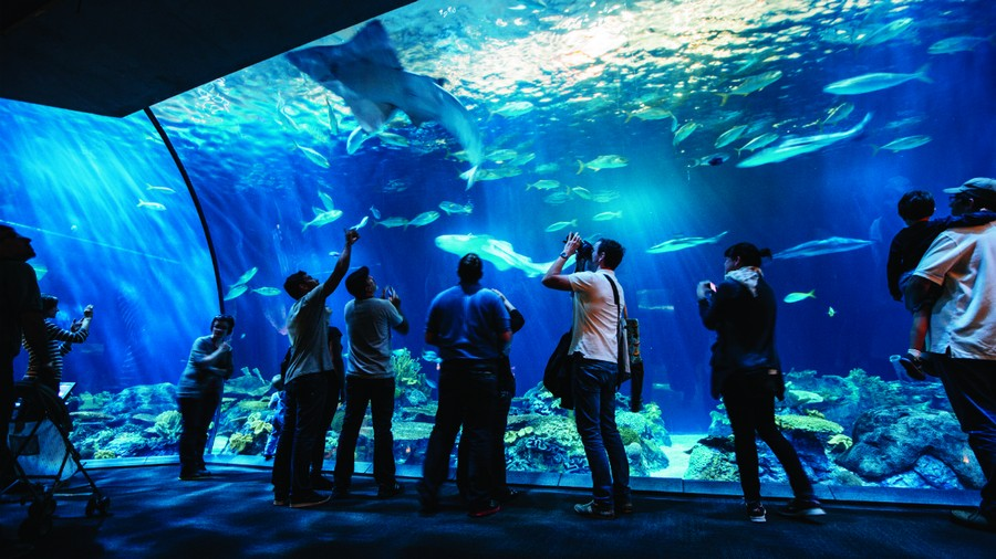 Experience the world's largest indoor aquarium