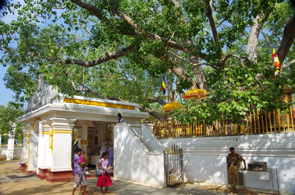 Jayasirimaha_Bosamidun_anuradhapura 2