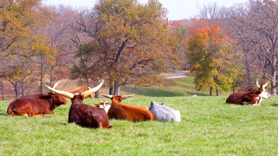 Grants-Farm st louis (1)