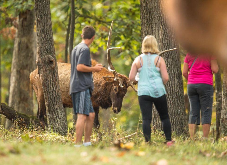Lone Elk park (1)