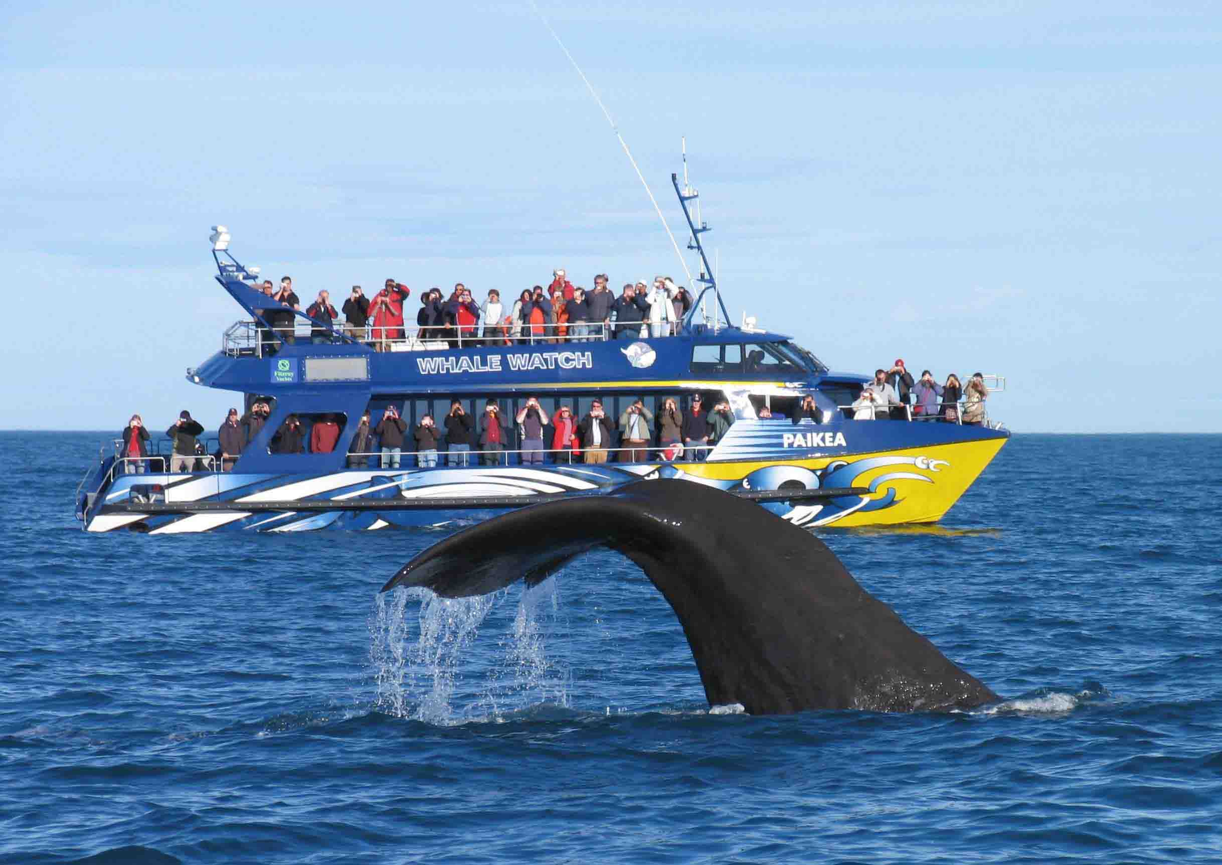Whales & Dolphin in Mirissa or Kalpitiya Sri Lanka
