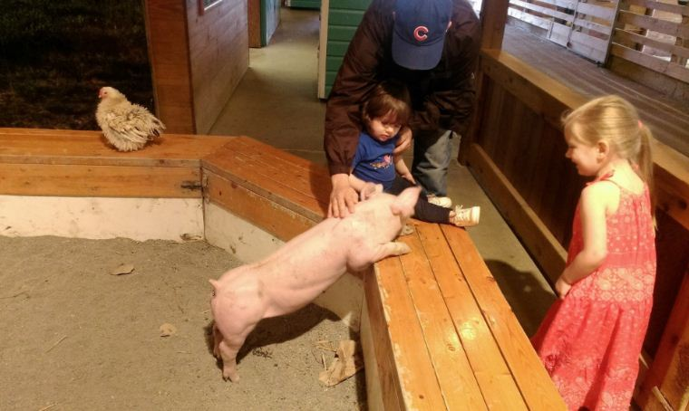 Hang out with farm animals at Purina Farms.