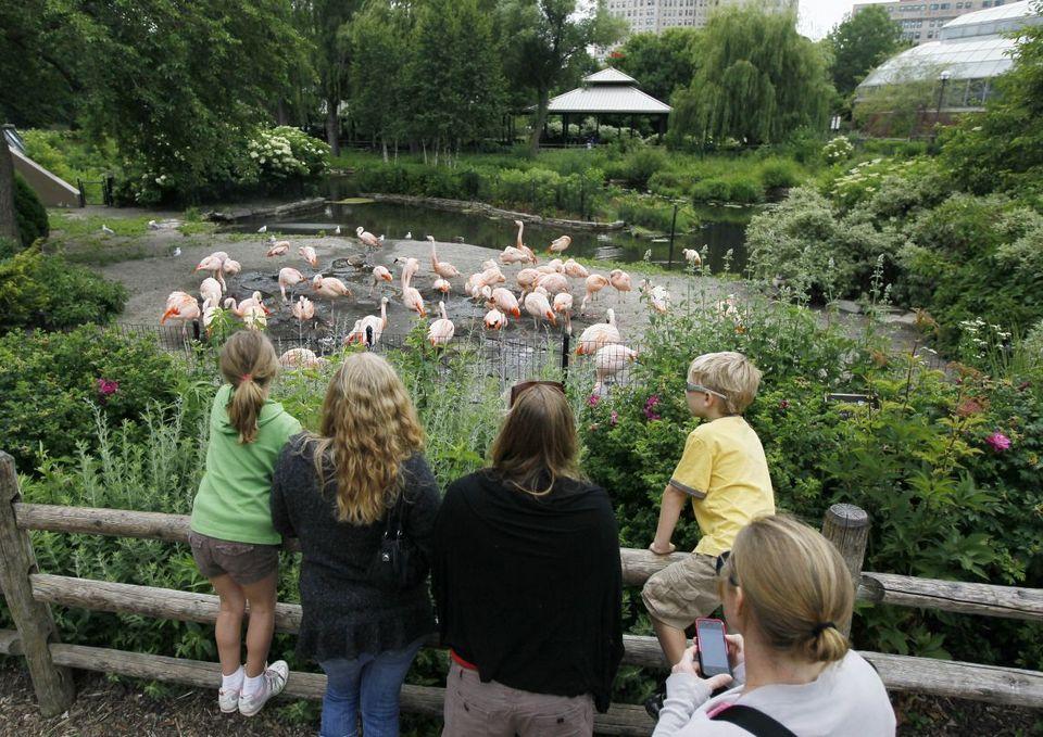 st-louis-zoo-animals missouri (1)