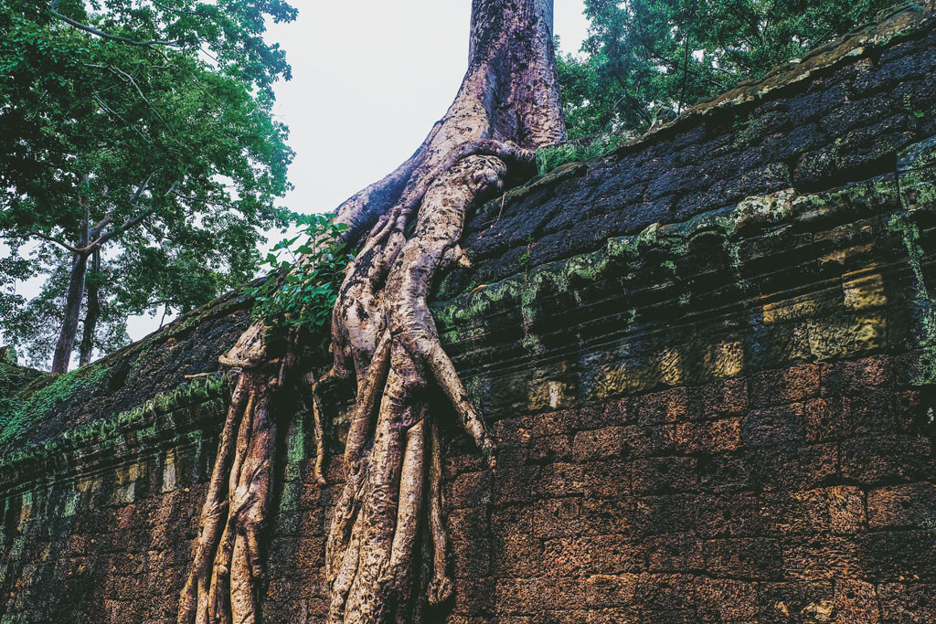 ta-prohm-temple siem reap itinerary 4 days 4 days in siem reap what to do in siem reap in 4 days