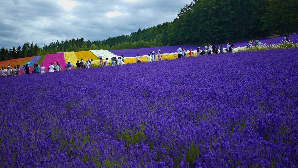 Tomita-hokkaido-panoramic flower garden2