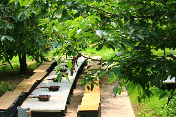 Yamamoto fruit orchard-hokkaido