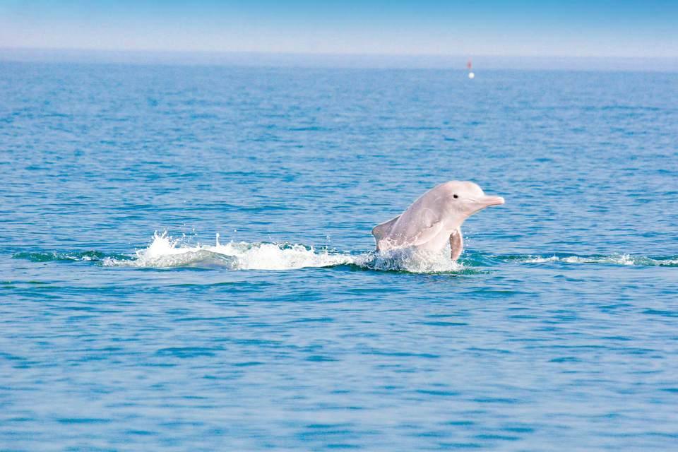 tai o dolphin