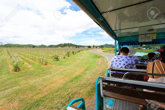 49013333-silver-lake-vineyard-pattaya-thailand