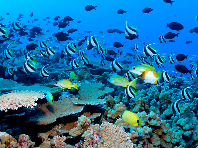 Coral Island -pattaya-thailand1