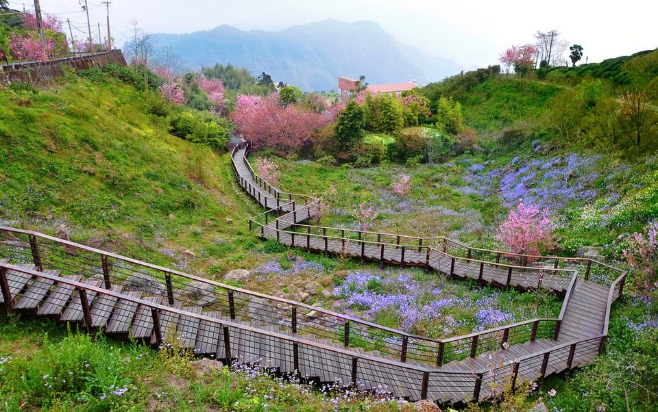 fenqihu-village-alishan-plateau-taiwan5