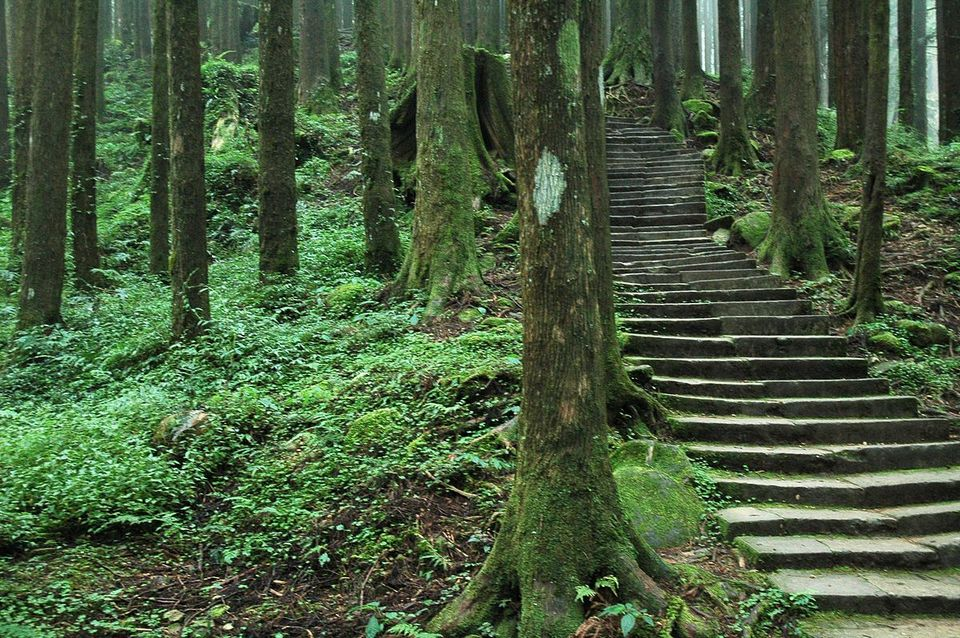 giant-trees-trail-alishan-plateau-taiwan9 Alishan travel guide what to do in alishan alishan travel blog
