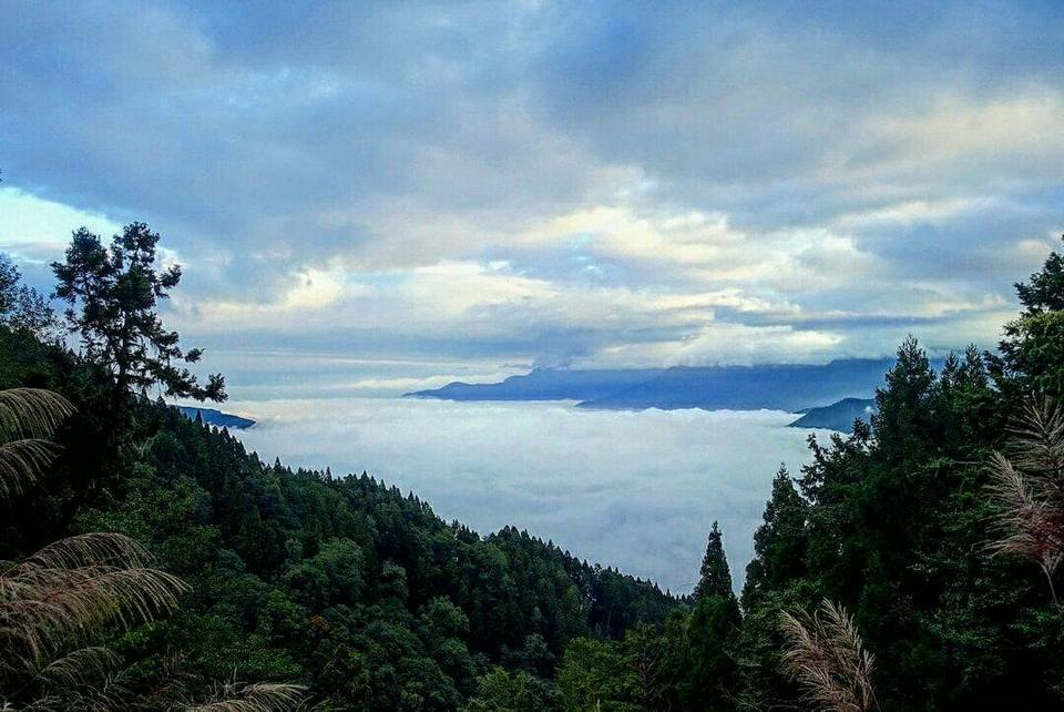alishan-mountain-taiwan2