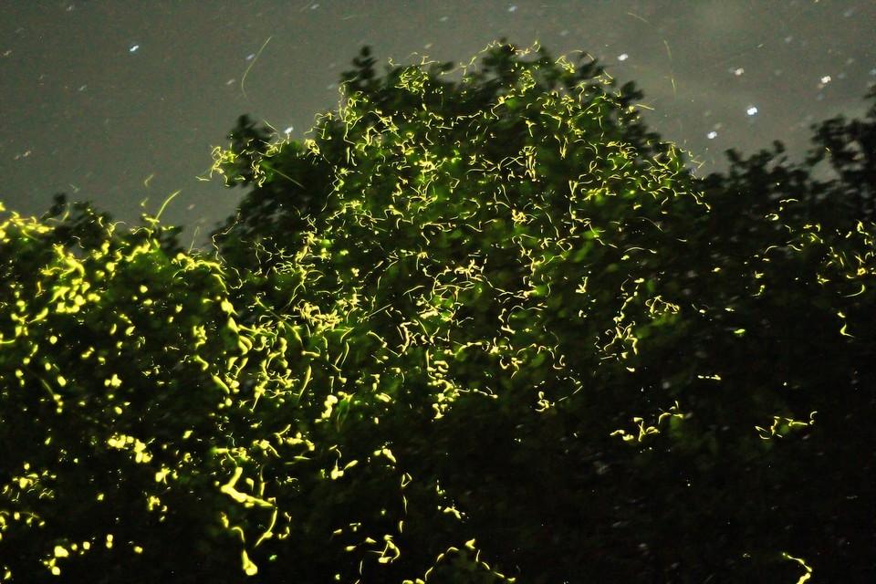 fireflies locboc river1