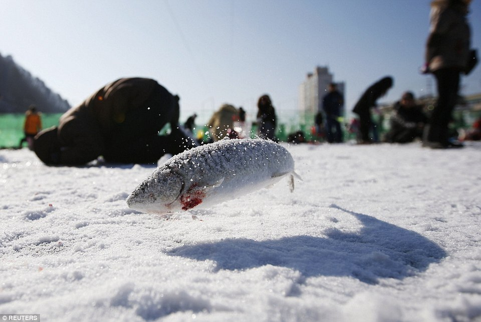 go fishing-in-winter-korea3