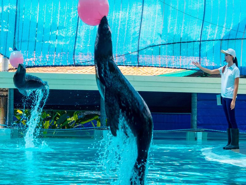 aquarium-tiger-zoo-koh-samui2