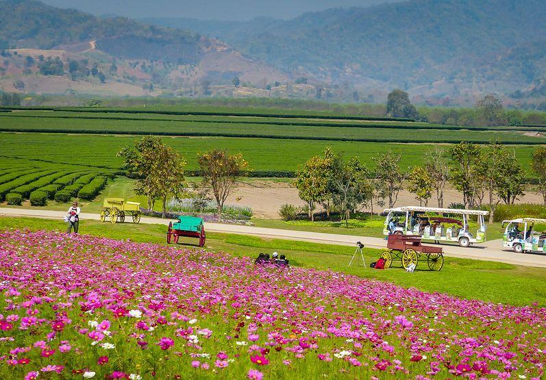 Singha_Park_Chiang_Rai-14-L chiang rai travel blog chiang rai province chiang rai travel guide chiang rai places to visit