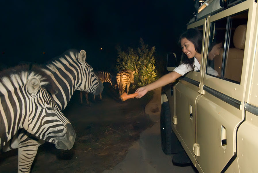 night safari singapore review singapore night safari tips night safari singapore itinerary 24
