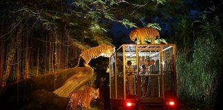 night safari singapore review singapore night safari tips night safari singapore itinerary 3