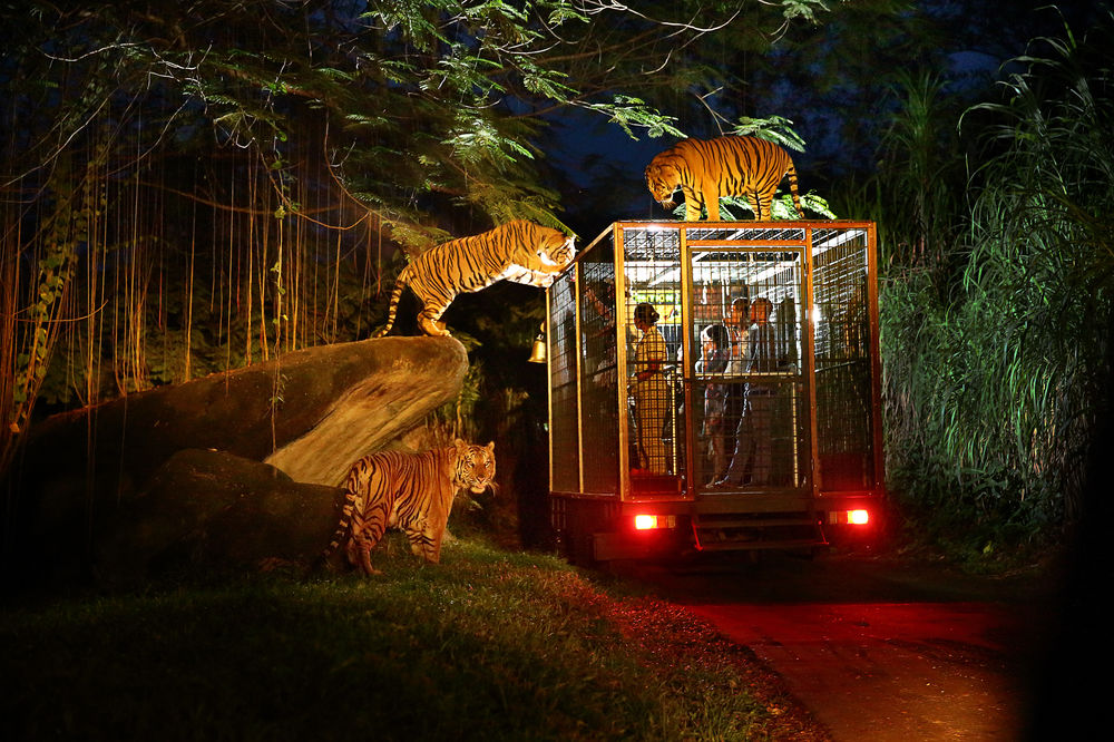Image result for Singapore Travel Guide: Zoo and Night Safari