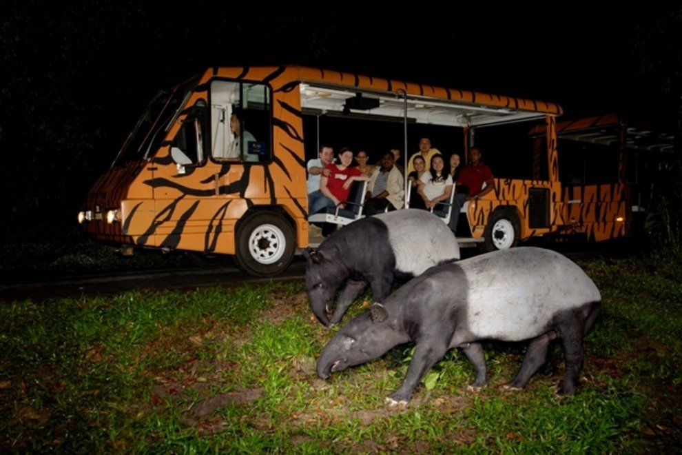 night safari singapore review singapore night safari tips night safari singapore itinerary 34