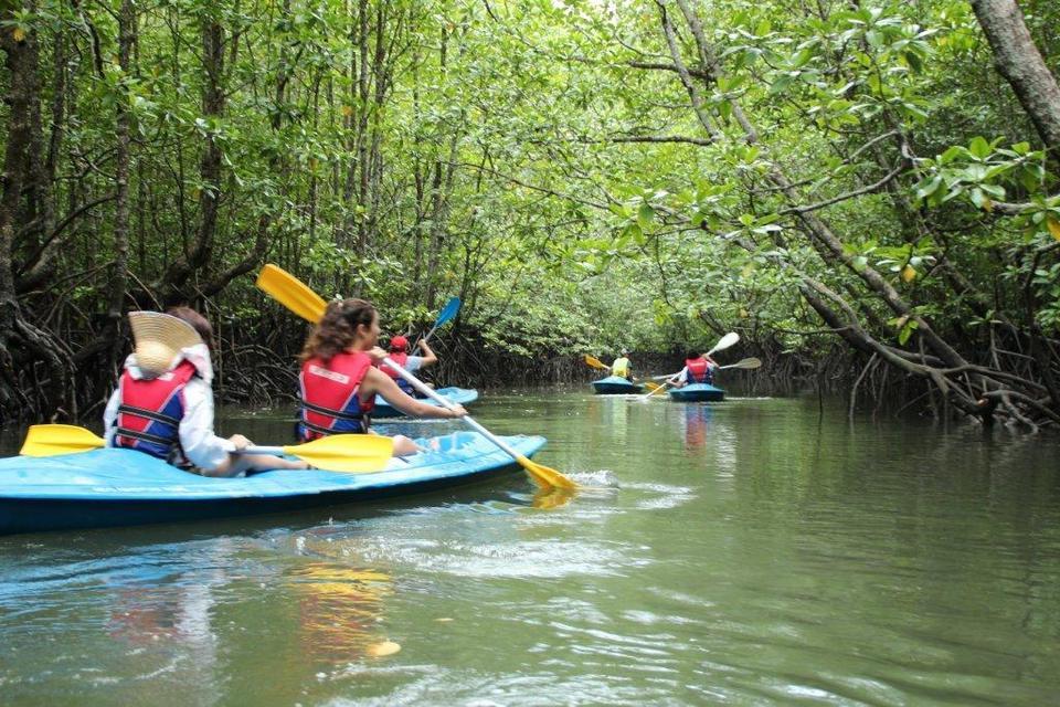 mangrove-langkawi-tours Image by: langkawi trip blog 2018.