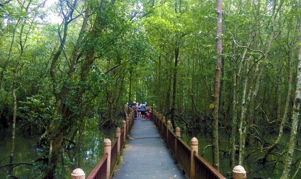 mangrove-langkawi-tours2