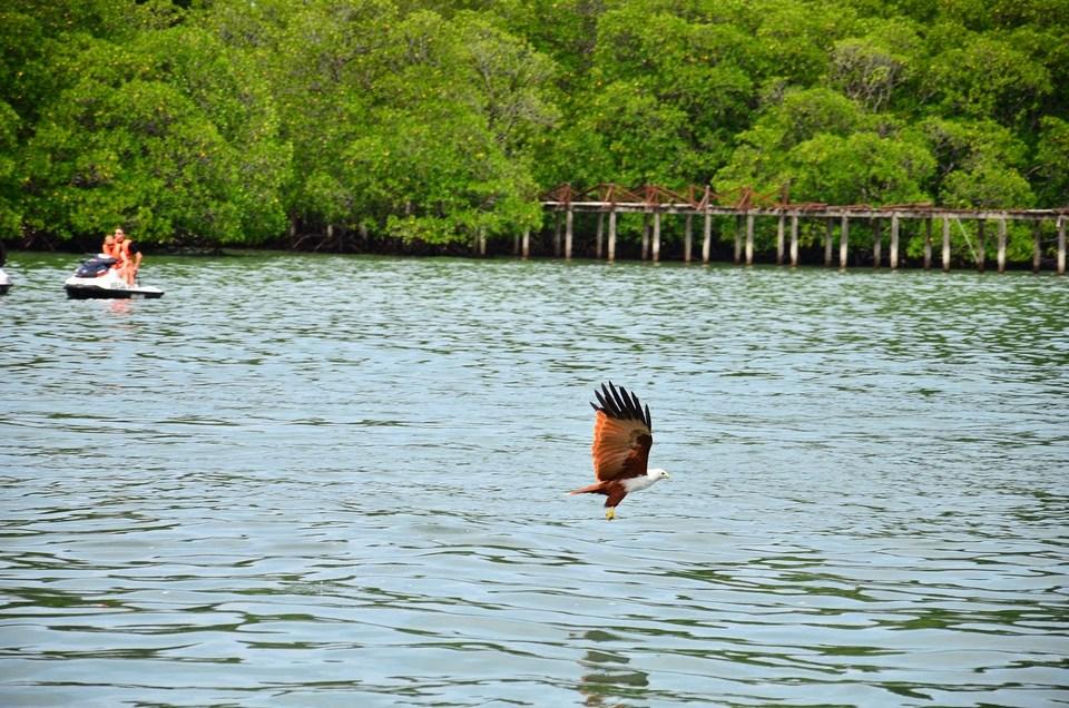 pulau-singa-besar-langkawi-tours2