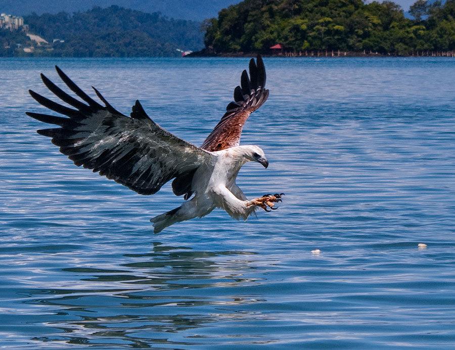 pulau-singa-besar-langkawi-tours3 Credit: langkawi blog 2017.