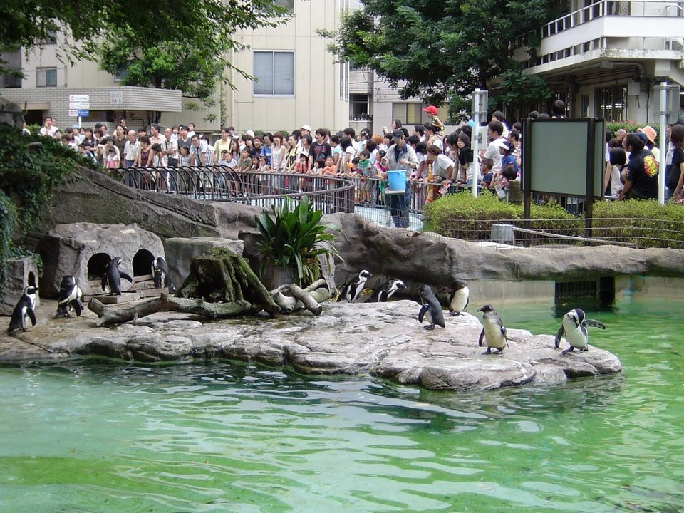 Ueno zoo-tokyo2 tokyo subway 24 hour ticket tokyo metro 24 hour ticket 24 hour subway ticket tokyo