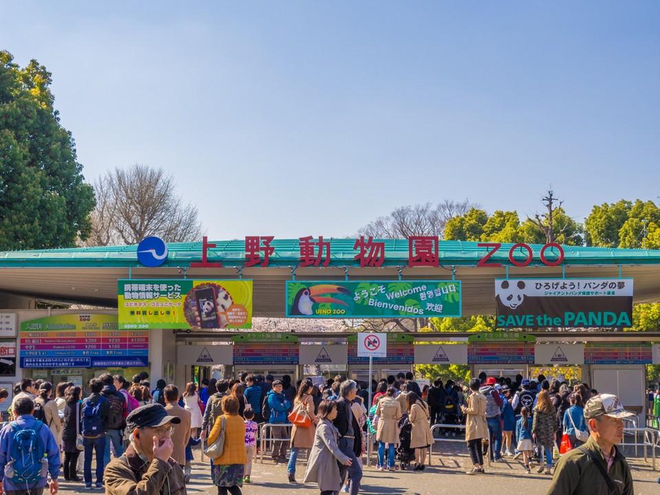 Ueno zoo-tokyo5