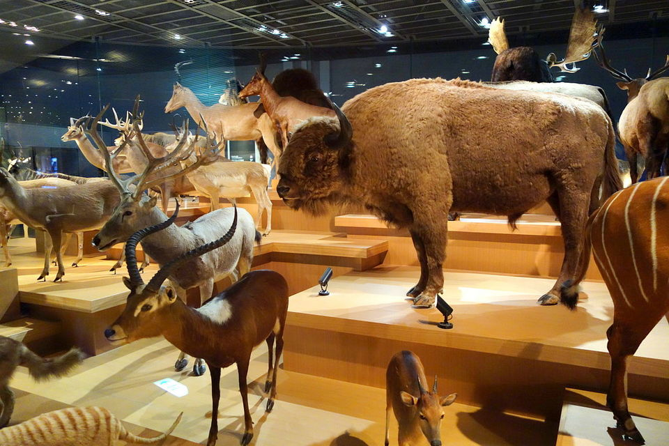 National Museum of Nature and Science Tokyo top museums in tokyo top 10 museums in tokyo best museums in tokyo