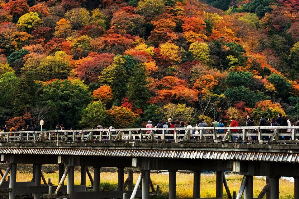 Arashiyama Bamboo momiji bridge