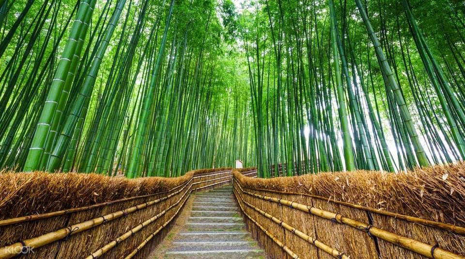 Arashiyama Momiji Festival