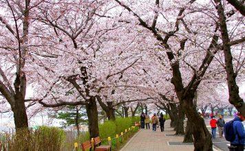 Seoul Travel