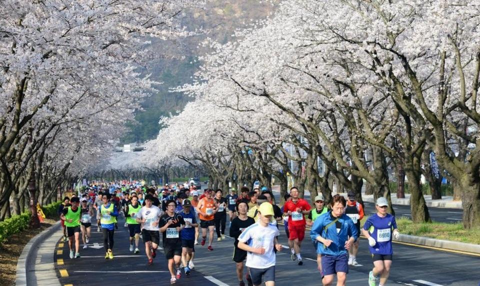 Club's Gyeongju Cherry Blossom Marathon trip