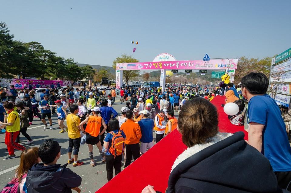 Gyeongju Cherry Blossom Marathon 2013