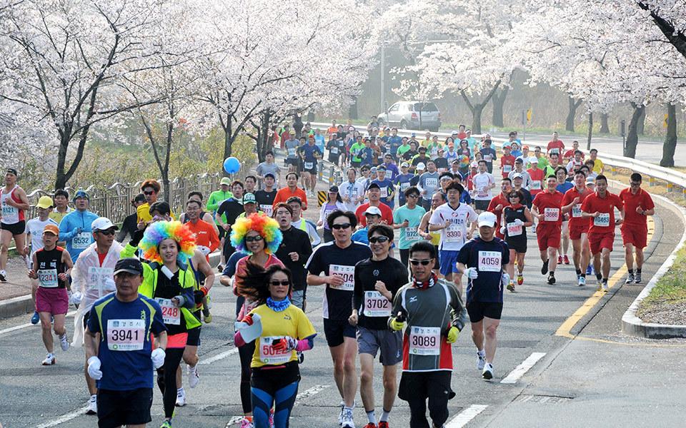 Gyeongju Cherry Blossom Marathon 2015