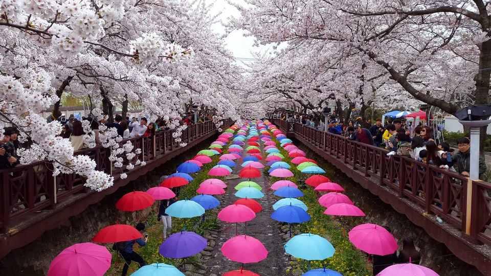 https://livingnomads.com/wp-content/uploads/2018/01/30/Jinhae-Gunhangje-Cherry-Blossom-Festival-Jinhae-2.jpg