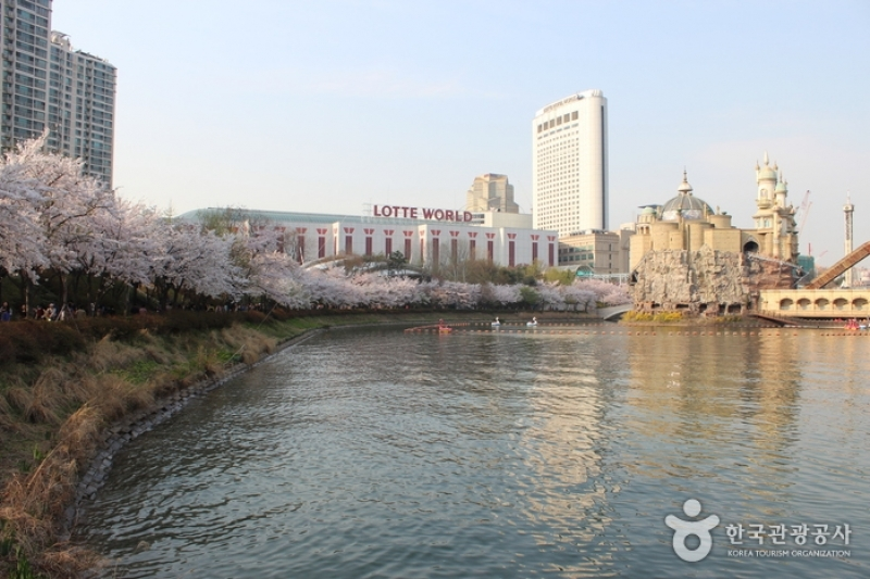 Seokchon Lake Cherry Blossom Festival cherry blossom in korea 2018 forecast korea cherry blossom 2018 forecast