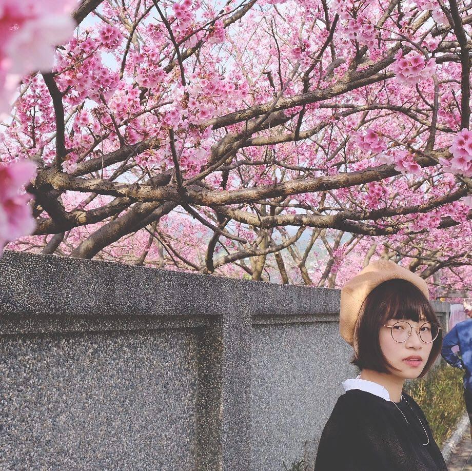 Pingjing Street, Lane 42 (平菁街42巷) taipei cherry blossoms (1)
