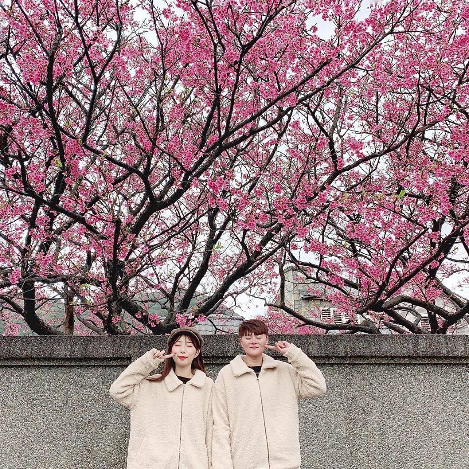 Pingjing Street, Lane 42 (平菁街42巷) taipei cherry blossoms (3)