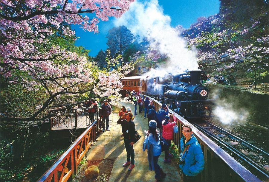taiwan cherry blossom 2018 forecast blog.